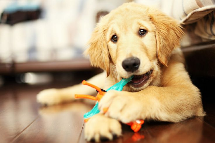 Our next Thursday puppy course is Thursday 19th September 6PM - Dog  Behaviour Wales
